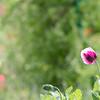 Garden Glimpses