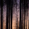 Spirit of the Pines