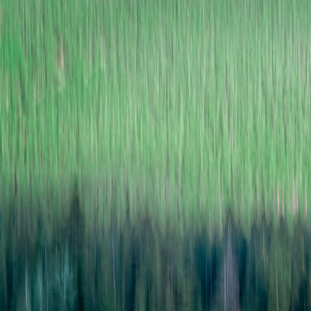 Forest Breath