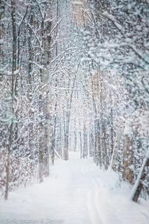 Winter Wanderings
