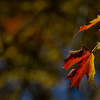 A Peek of Fall