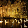 Night Swans