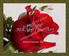 Red Rose Flower 8013.02