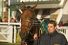 What aWarrior (Ire) Trained by Nigel Twiston-Davies paraded before the Betfred 1350 Shops Nationwide Novices' Handicap Hurdle (Class 4)