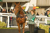 Miss Abbey, Trained by Nicky Richards, paraded before the Betfred 1350 Shops Nationwide Novices' Handicap Hurdle (Class 4)