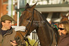 Unknown horse, paraded before the Betfred 1350 Shops Nationwide Novices' Handicap Hurdle (Class 4)