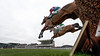 Aintree Becher Chase Day 2016
