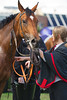 Chester Races May Festival Day 3 Boodles City' Day11th May 2012,