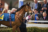 Chester Races May Festival Day 3 Boodles City' Day11th May 2012, Last Bid