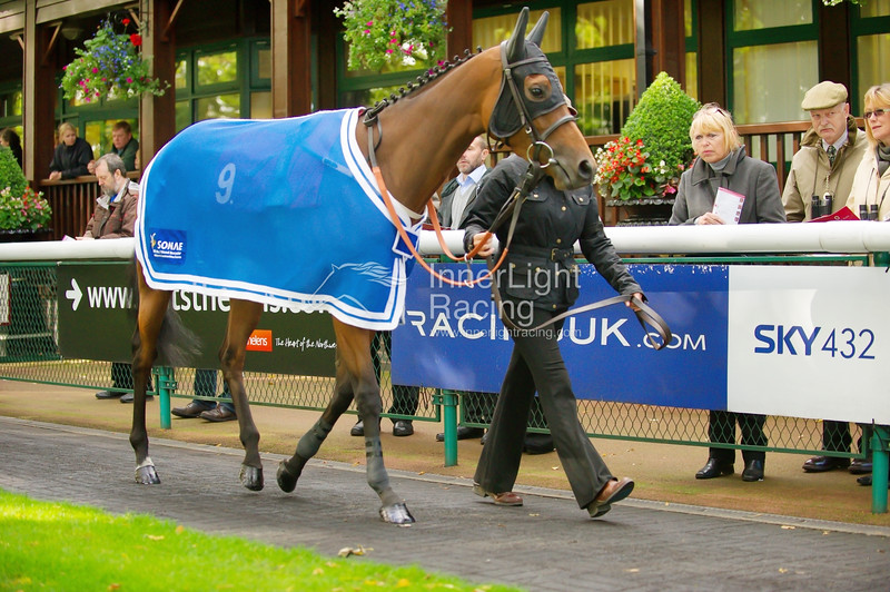 """Haydock Park Lester Piggott Day 29/09/2012 The E.B.F. Stainless Wire """"Reprocolor"""" Fillies Handicap Stakes (Class 3) Lady Loch, Richard Fahey."""
