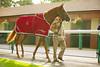 Haydock Park Lester Piggott Day 29/09/2012 The Nationwide Platforms Handicap Stakes (Class 2) Suraj, Micheal Bell