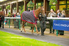 """Haydock Park Lester Piggott Day 29/09/2012 The E.B.F. Stainless Wire """"Reprocolor"""" Fillies Handicap Stakes (Class 3)"""