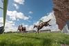 Haydock Park; Pertemps Swinton Hurdle Day 11/05/2013