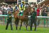 Haydock Park bet365.com Old Newton Cup Day 2014