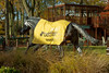 Haydock BetFair Chase Meeting Saturday 19th November 2016