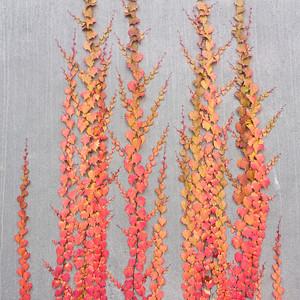 Creeping fall colors