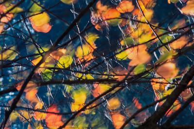 Flittering cherry leaves