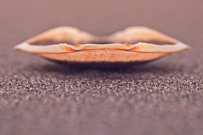 Crab shell lips, Washington, USA