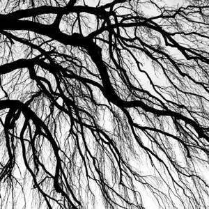 Tree silhouette 2
