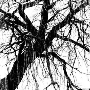 Tree silhouette 8 Trauerweide