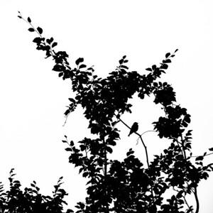 Tree silhouette 16