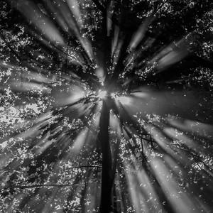 Radiating tree