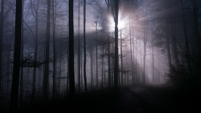 Mystic foggy winter forest