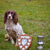 Synceros Sparkle with the Worcestershire Gundog Society Open Spaniel Shield & the Truwills Challenge Cup as Best Hunting Dog of the Day