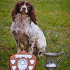 Winning Open Spaniel Synceros sparkle owned and handled by Mr Bob Lowe