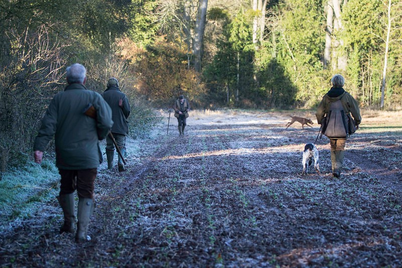 D4Dogs HPR Live Shoot Over Training Day-12