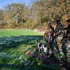 D4Dogs HPR Live Shoot Over Training Day Card 2-4