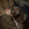 D4Dogs HPR Live Shoot Over Training Day-10