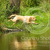 Wrencourt Retriever training July-104