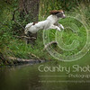 Wrencourt Retriever training July-143