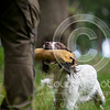 Wrencourt Retriever training July-28