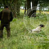 Wrencourt Retriever training July-220