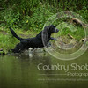 Wrencourt Retriever training July-163