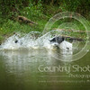 Wrencourt Retriever training July-167