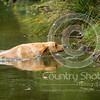 Wrencourt Retriever training July-111