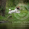 Wrencourt Retriever training July-144