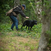 Wrencourt Retriever training July-157