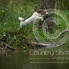 Wrencourt Retriever training July-141