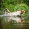 Wrencourt Retriever training July-118