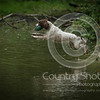 Wrencourt Retriever training July-148