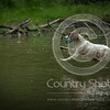Wrencourt Retriever training July-149