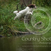 Wrencourt Retriever training July-142