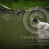 Wrencourt Retriever training July-150