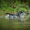 Wrencourt Retriever training July-166