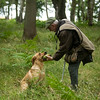 Wrencourt Retriever training July-239