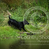 Wrencourt Retriever training July-160